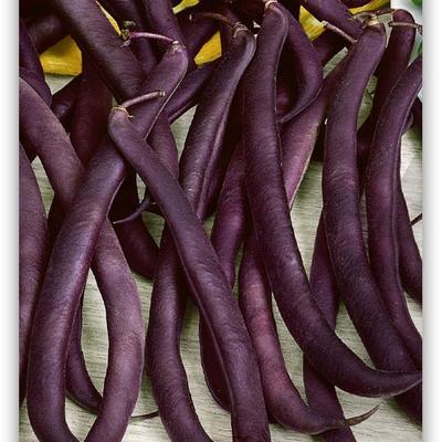 Samenpäckli Buschbohne Purple